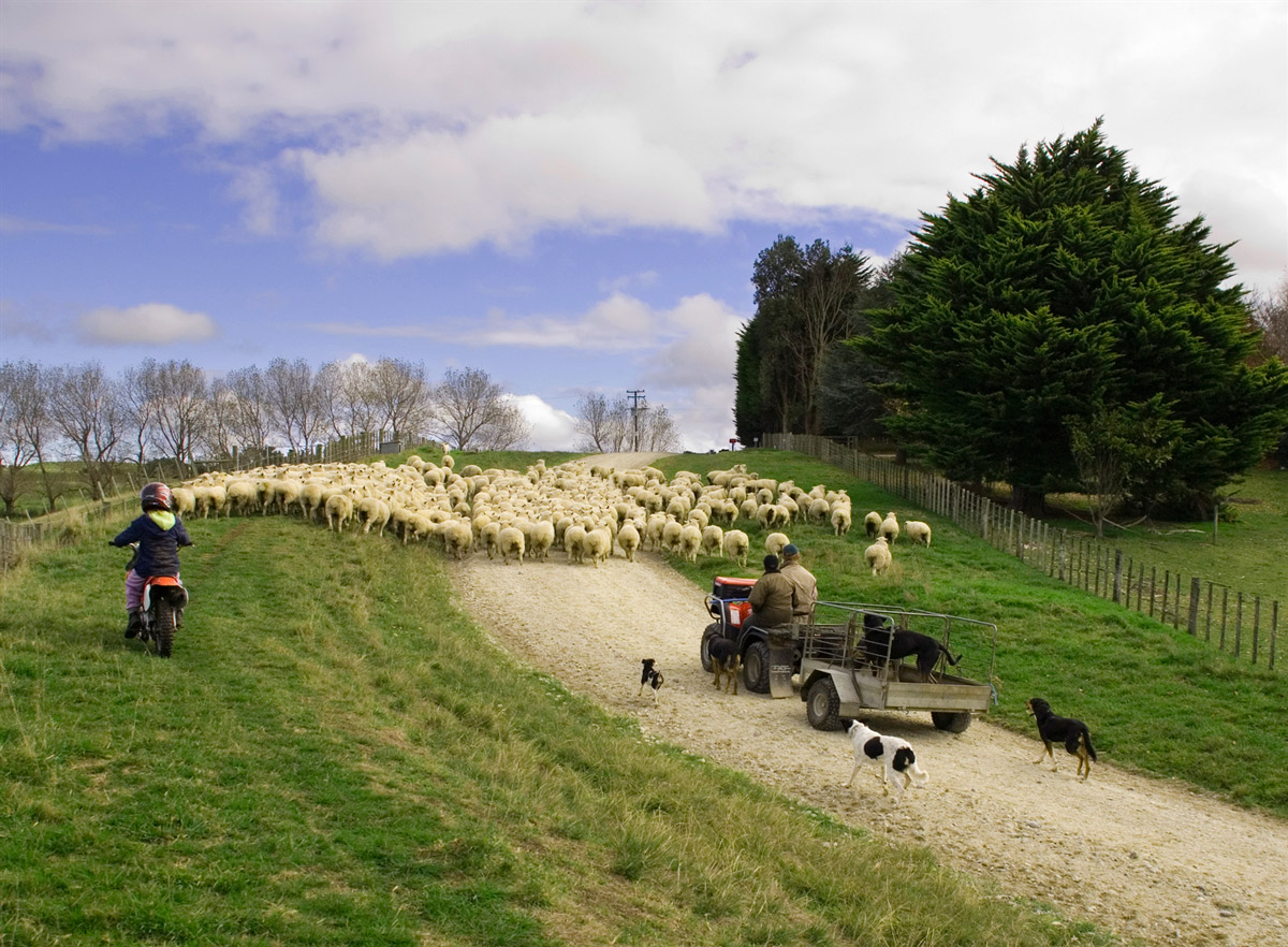 Rural new zealand farming accounting packages
